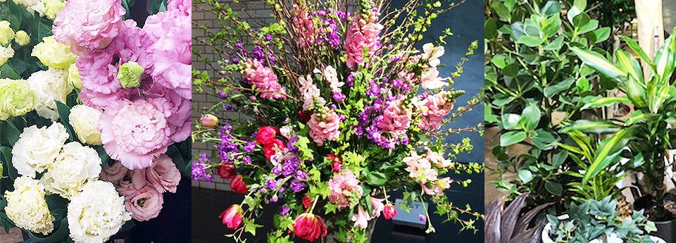 花むつみの商品